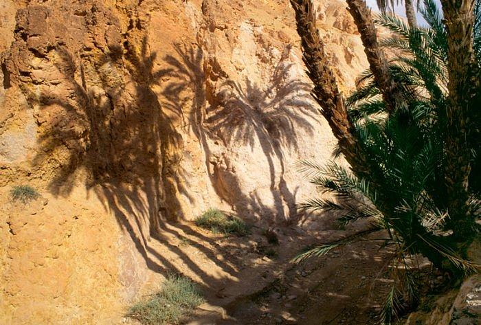 Ombres de palmiers